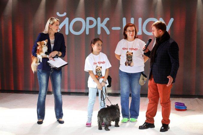 Семейно-развлекательное ШОУ о маленьких талантливых собачках